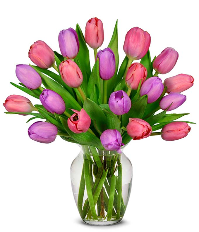 Pink and Purple Tulips - 20 Stems