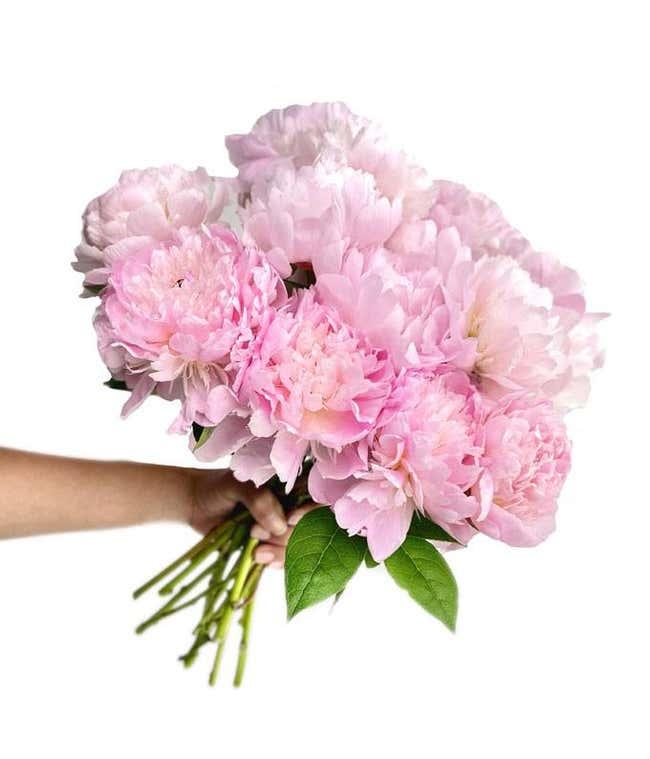 Pretty Pink Peonies - Deluxe