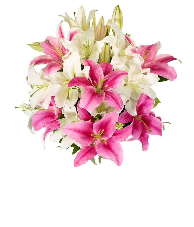 Pink stargazer lilies and white lilies