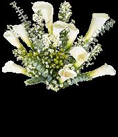 Sympathy Calla Lilies - Deluxe