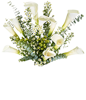 White calla lilies with Eucalyptus