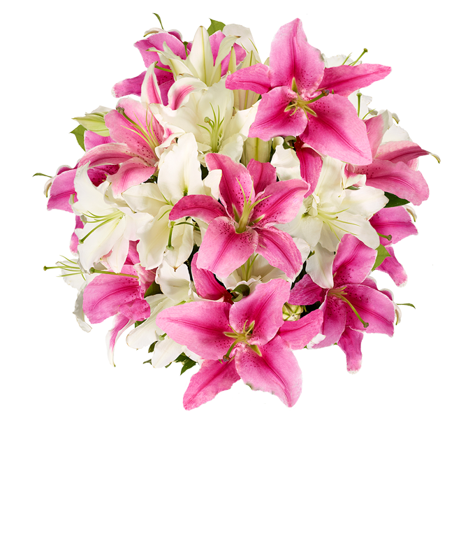 Premium Pink Lilies and White Lilies