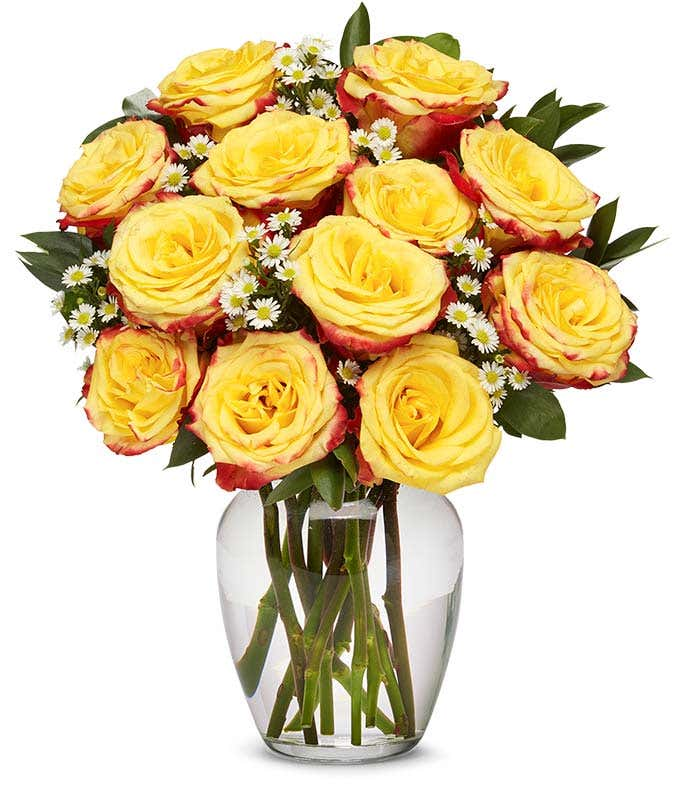 One Dozen Bi-Colored Roses