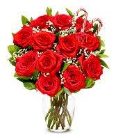 One Dozen Premium Christmas Roses