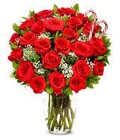 Two Dozen Premium Christmas Roses