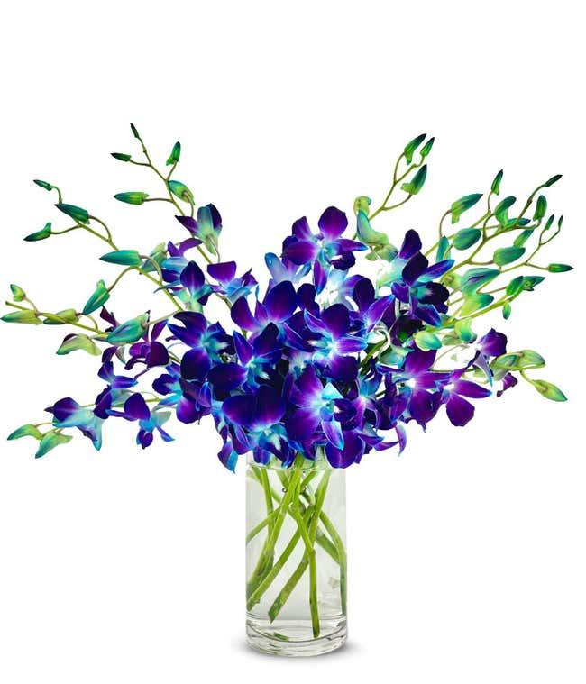 Galactic Blue Dendrobium Orchids