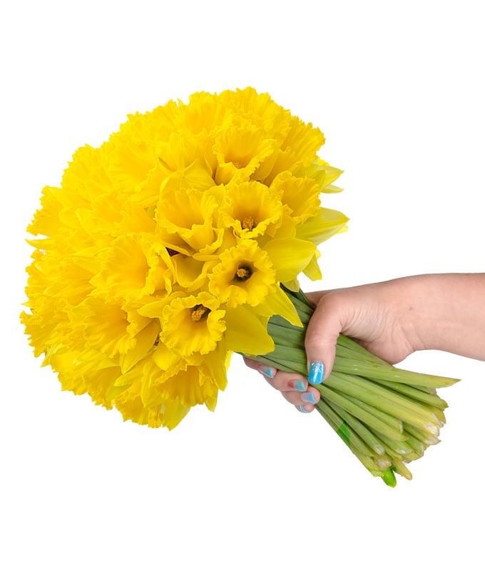 Spring Daffodils -...