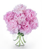 Perfect Peonies - 7 Stems