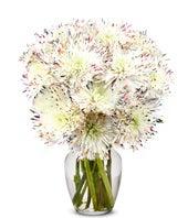 Floral Confetti...
