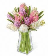 Pastel Hyacinth Blooms