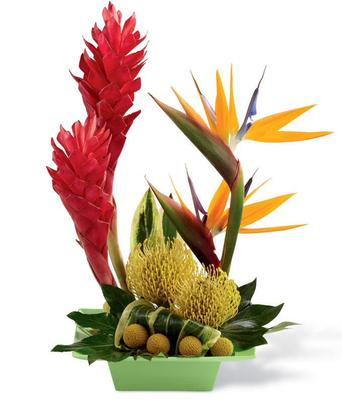 Tropical Sublime Arrangement