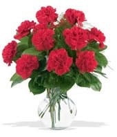 One Dozen Red Carnations