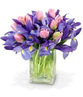 Pink tulips with blue iris