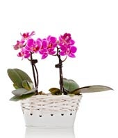 Serenity Mini-Orchid Planter
