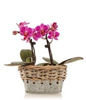Rustic Mini Orchid Planter