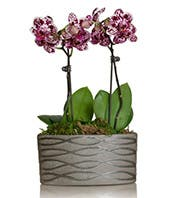 small purple and white orchid plant