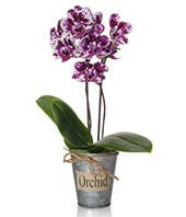 Purple Hues Orchid Arrangement