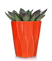 Amazing Succulent Plant