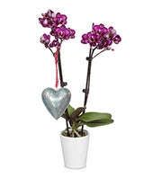 Rustic Heart Orchid