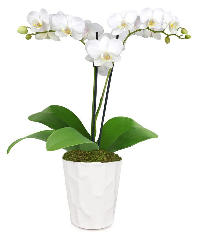Wonderful White Orchid