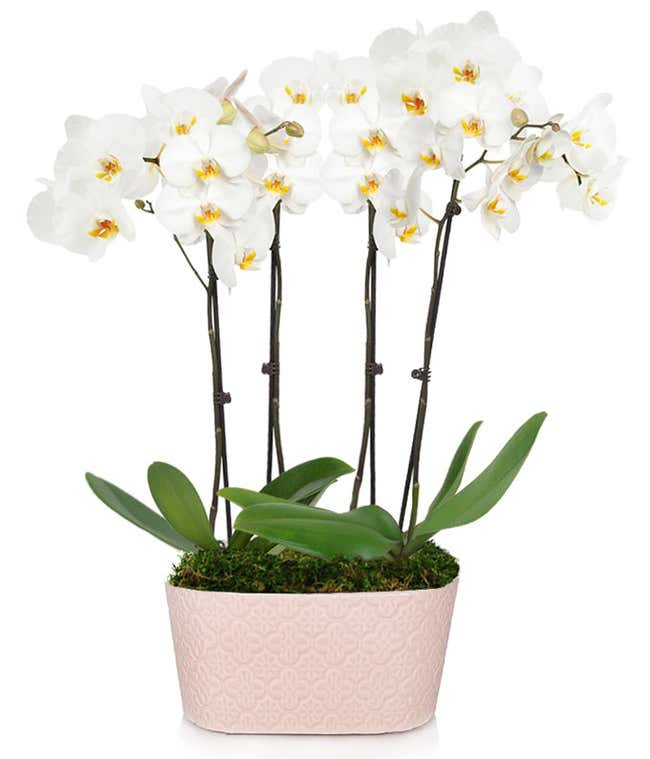 Large white orchid planter