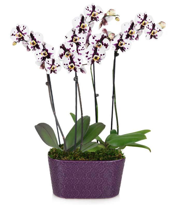 Amethyst Crystal Orchid