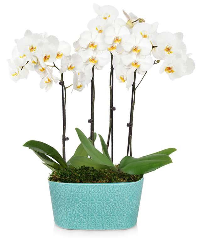 Sea Glass Orchid