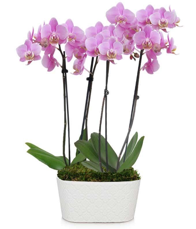 Large purple orchid delivered