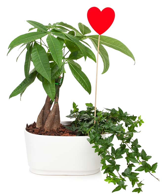 Money Tree Garden of Love