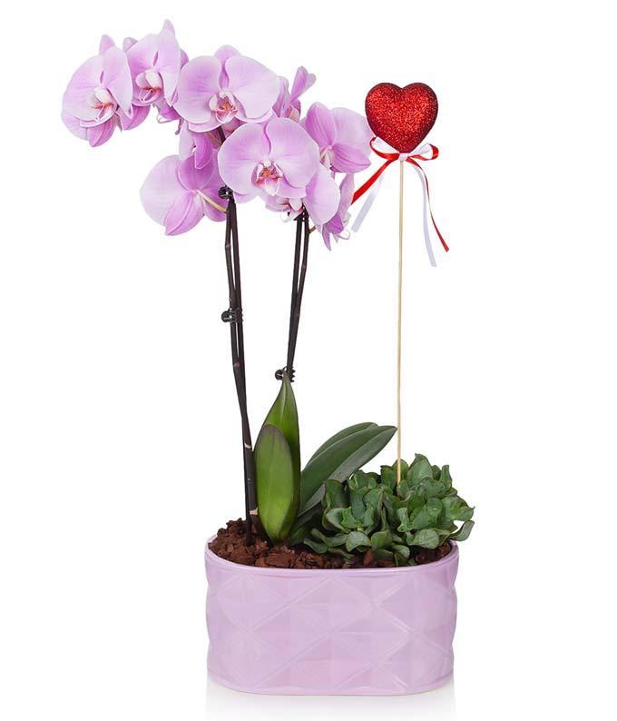 Loving Lavender Orchid Garden