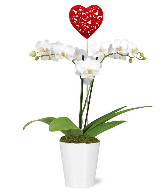 All My Heart Orchid Planter