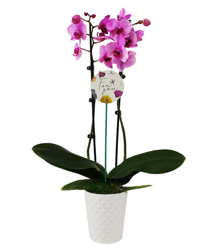 Forever My Valentine Orchid Planter