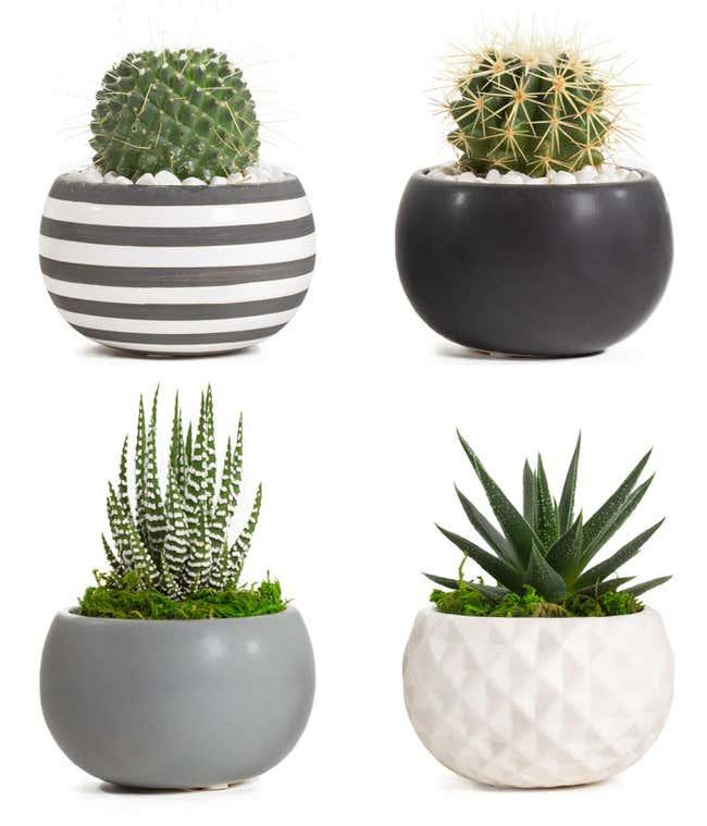 Modern Life Succulent Planters