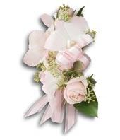 Beautiful Blush...