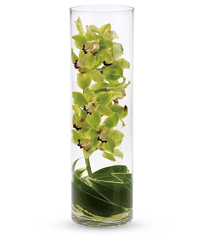 Sensational Cymbidium Orchid