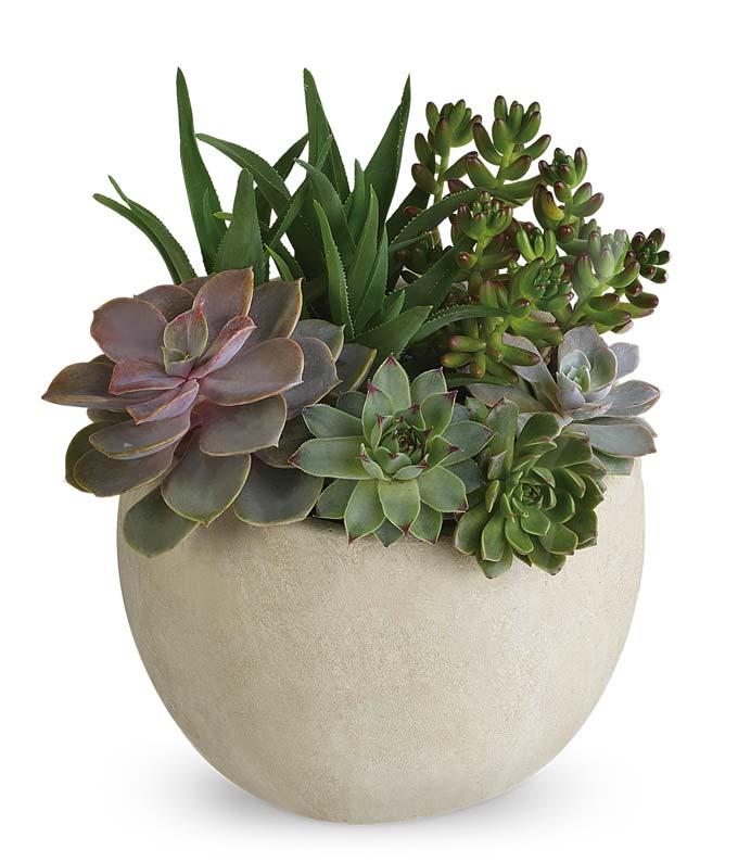 Modern Succulent...