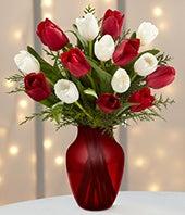 Christmas Tulip...