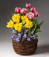 Spring Bulb Plant...