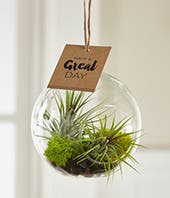 Have A Great Day Hanging Air Plant