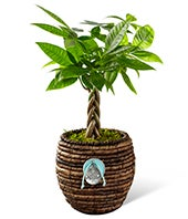 Braided Zen Plant