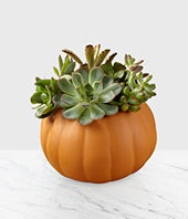 Seasonal Succulent...