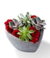 Love Succulent...