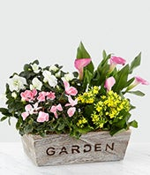 Sweet Spring Garden...