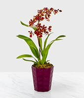 Autumn Harvest Orchid