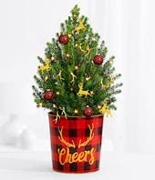 Mini Spruce Tree for delivery
