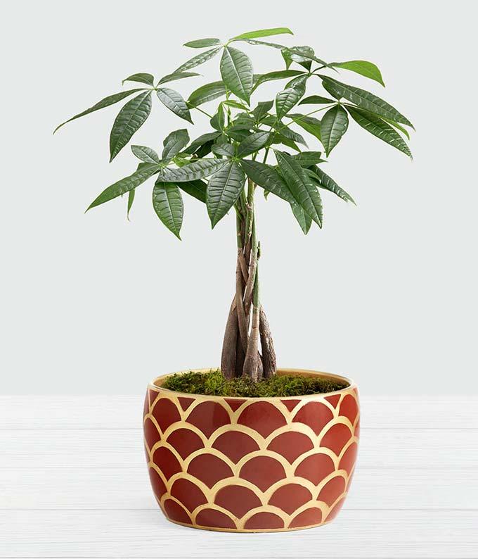 Prosperous Money Tree