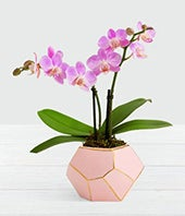 Posh In Pink Orchid