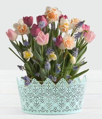 Spring flowering plant