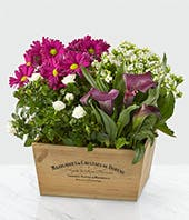 Simply Yours Dish Garden