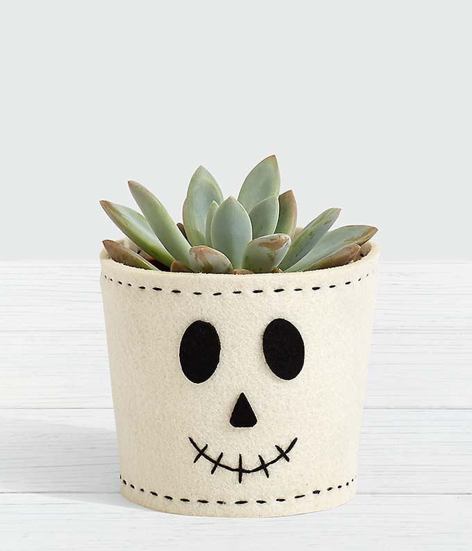 Potted Spook-ulent